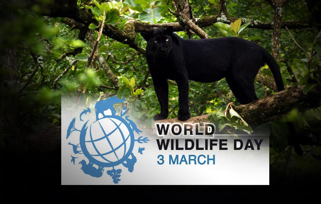 3 มีนาคม วันสัตว์ป่าและพืชป่าโลก