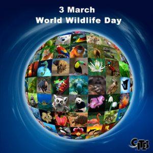 3 มีนาคม วันสัตว์ป่าและพืชป่าโลก World Wildlife Day