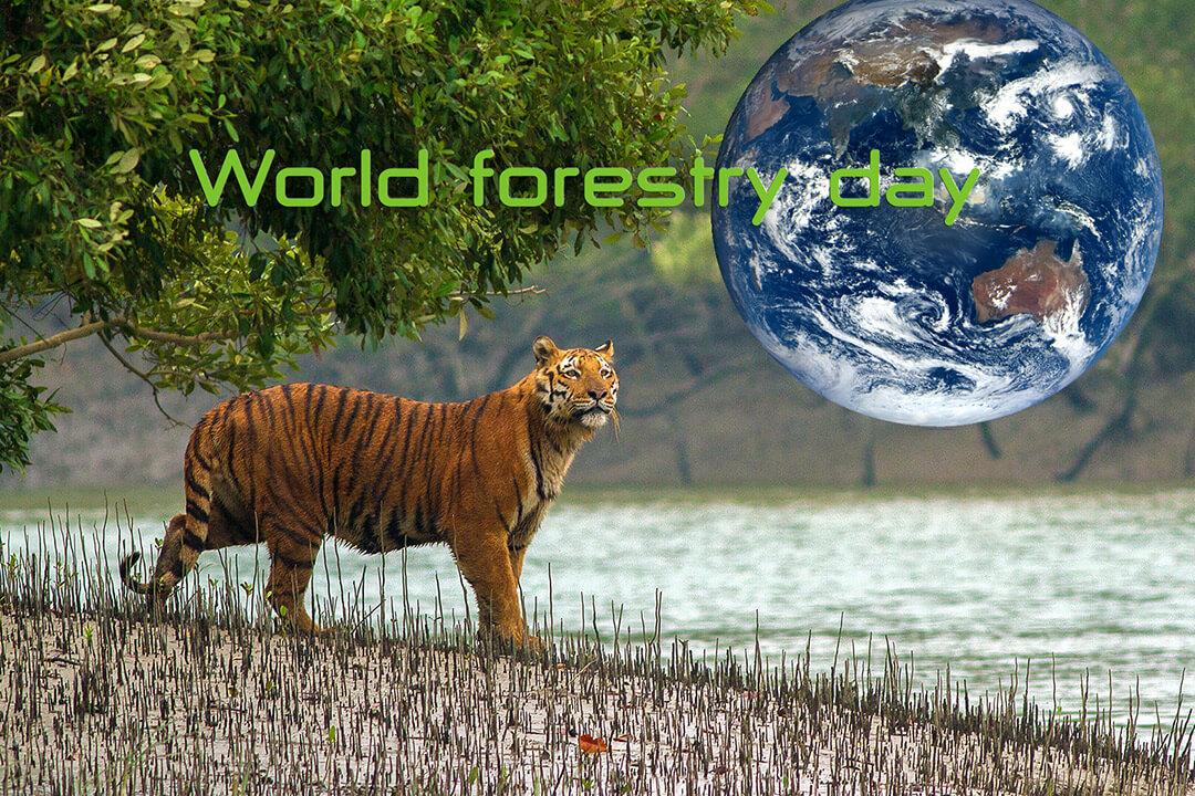 21 มีนาคม วันป่าไม้โลก (World forestry day)