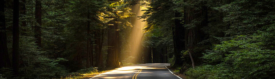 road forest-วันป่าไม้-World forestry day