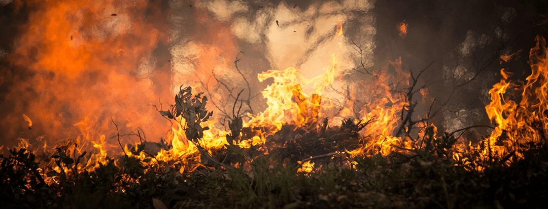 ไฟป่า-fire-World forestry day-