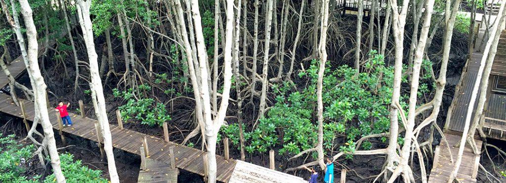 วันป่าชุมชนชายเลนไทย-thai mangroveforest day