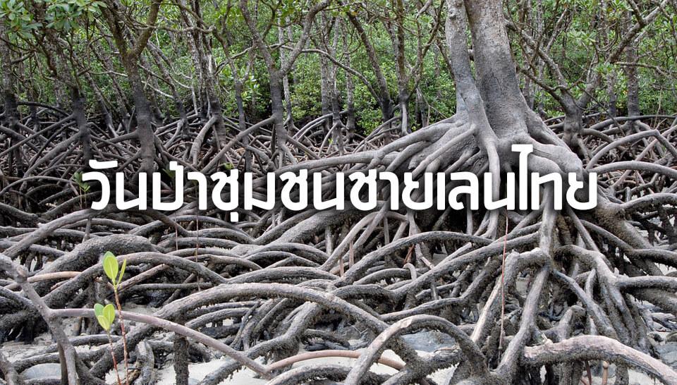 วันป่าชุมชนชายเลนไทย