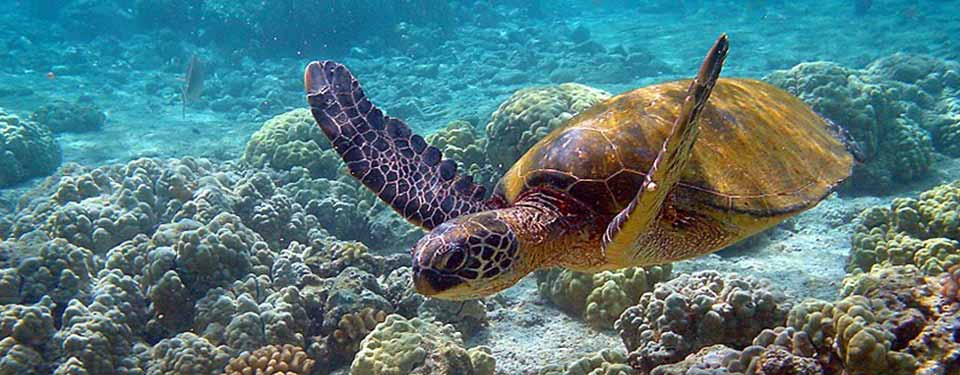วันเต่าโลก World Turtle Day