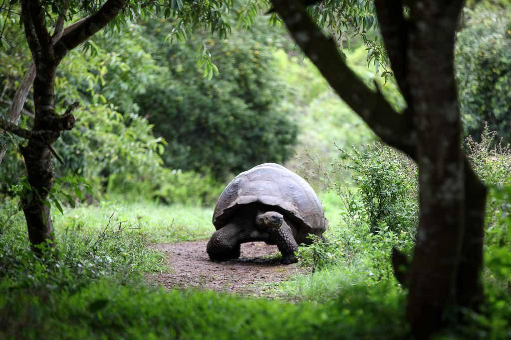 วันเต่าโลก-World Turtle Day
