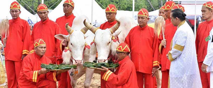 พิธีจรดพระนังคัลแรกนาขวัญ-วันพืชมงคล-royal-ploughing-ceremony