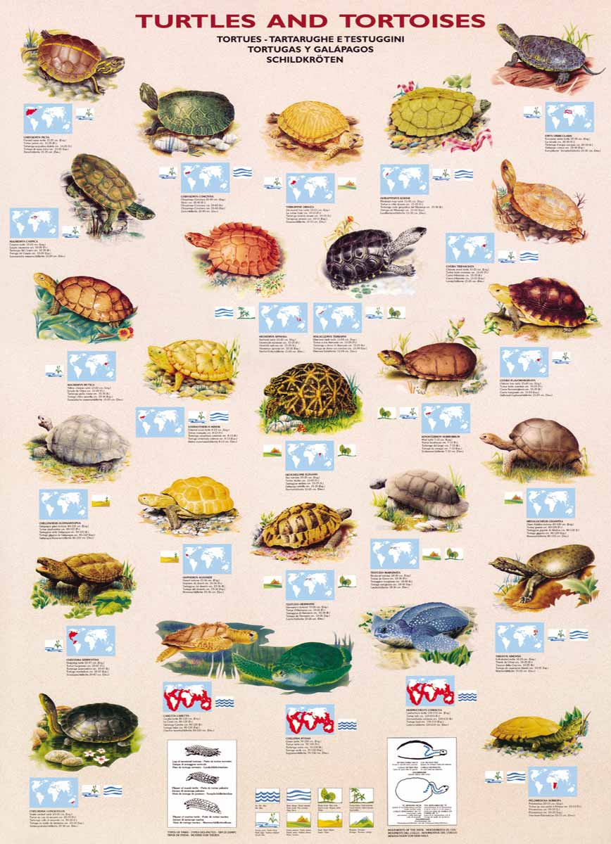 turtle type-=ชนิดของเต่า