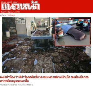 ภาพข่าว หนังสือพิมพ์แนวหน้า วาฬกินพลาสติกเสียชีวิตเกยตื้นในประเทศไทย