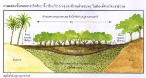 แกล้งดิน-ขั้นตอน 1