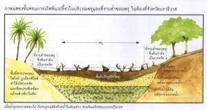 แกล้งดิน-ขั้นตอน 2