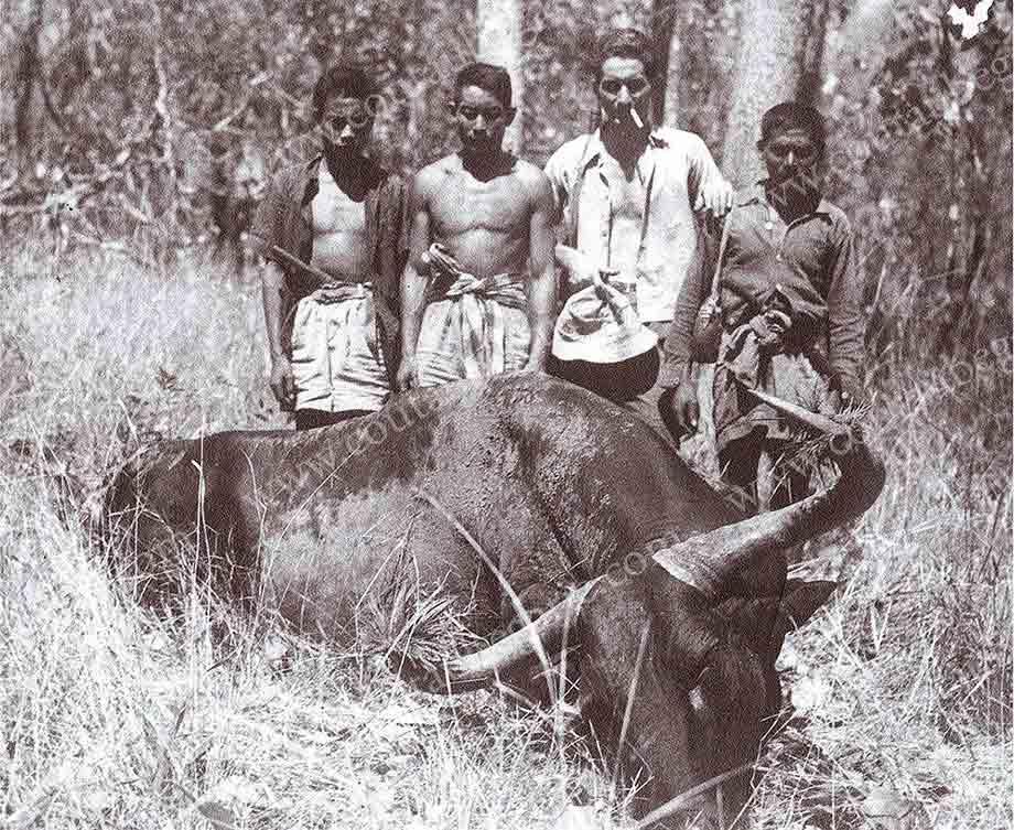 อนุรักษ์สัตว์ป่า-กรูปรี